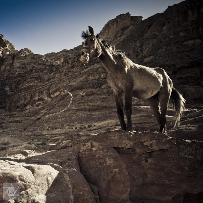 Photograph The Horse and the metal snake by Jimmy Álvarez on 500px