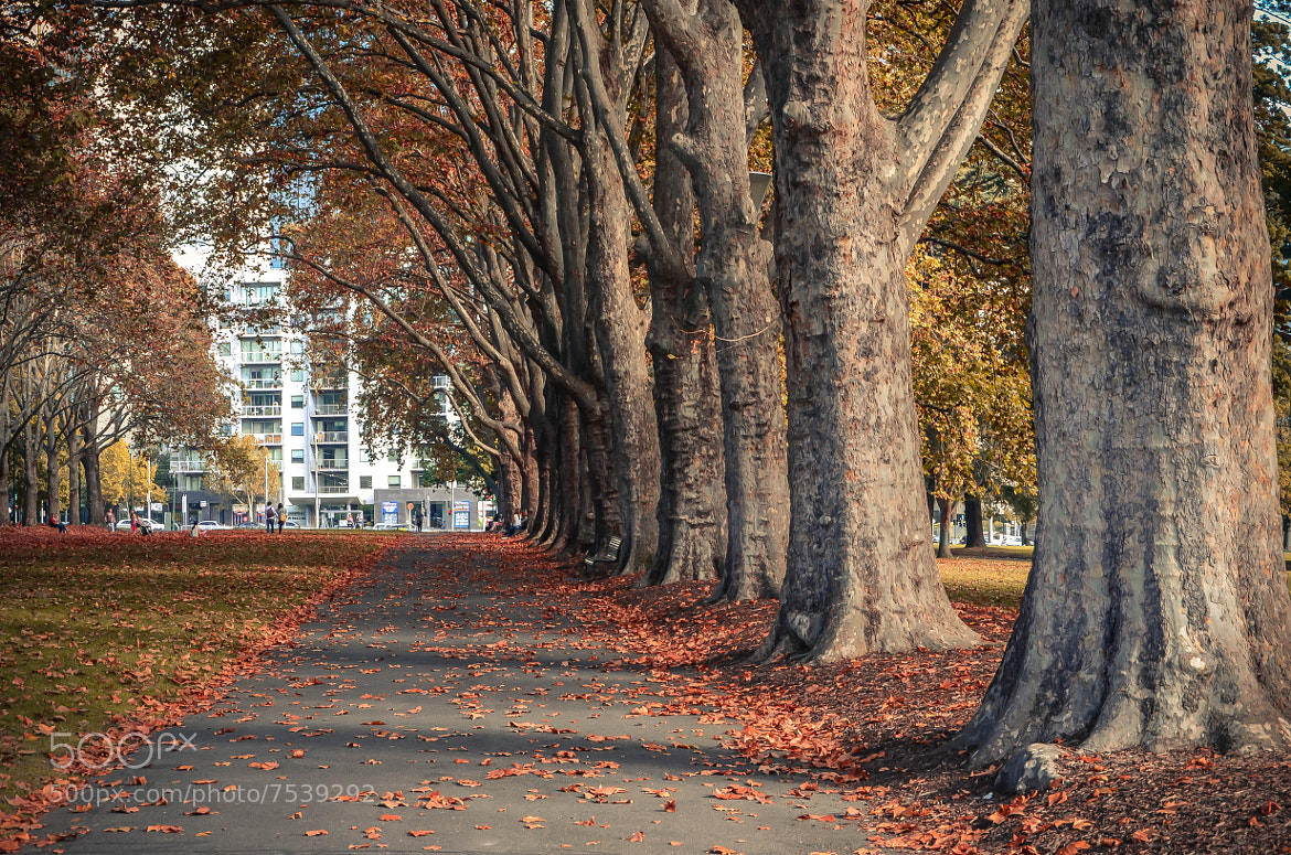 Photograph Autumn Leaves by Ading Attamimi on 500px