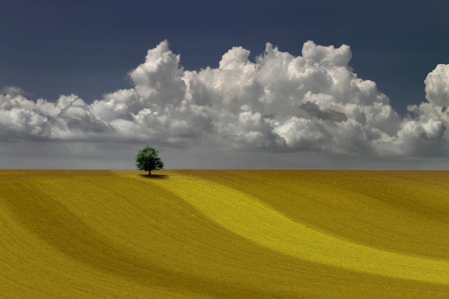 Photograph Tree on Hill by Carlos Gotay on 500px