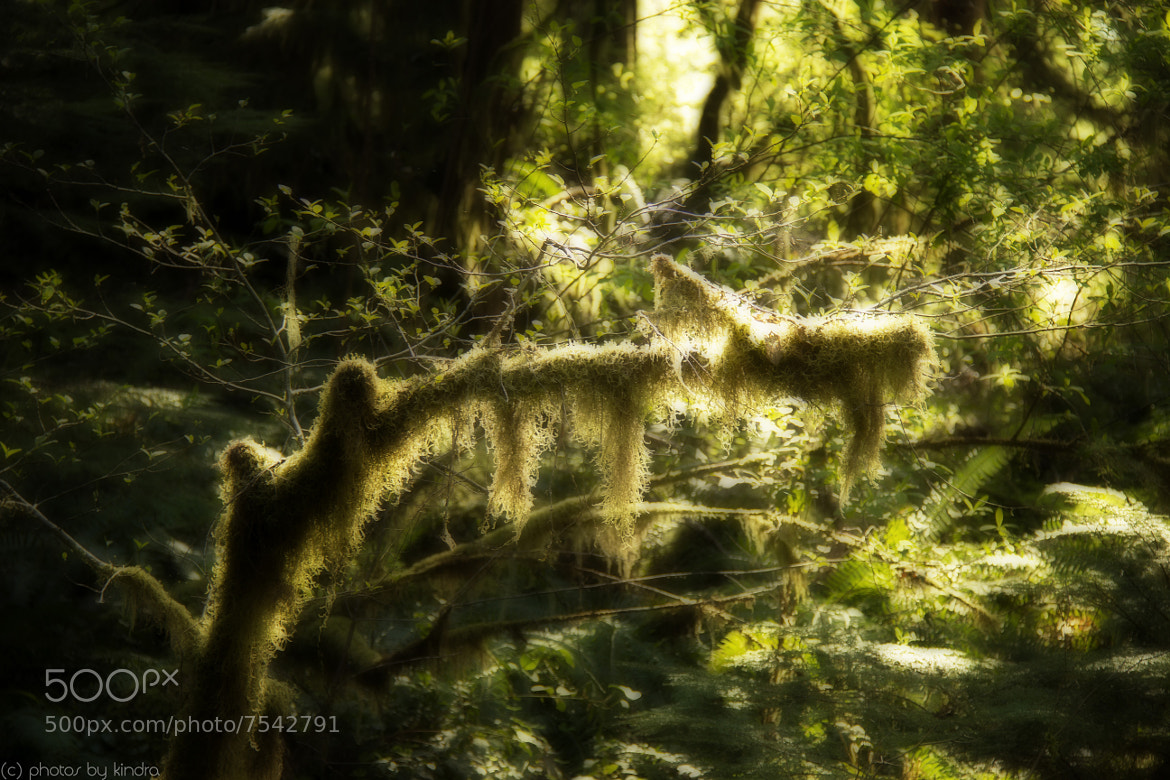 Photograph Glowing Moss by Kindra Martinenko on 500px