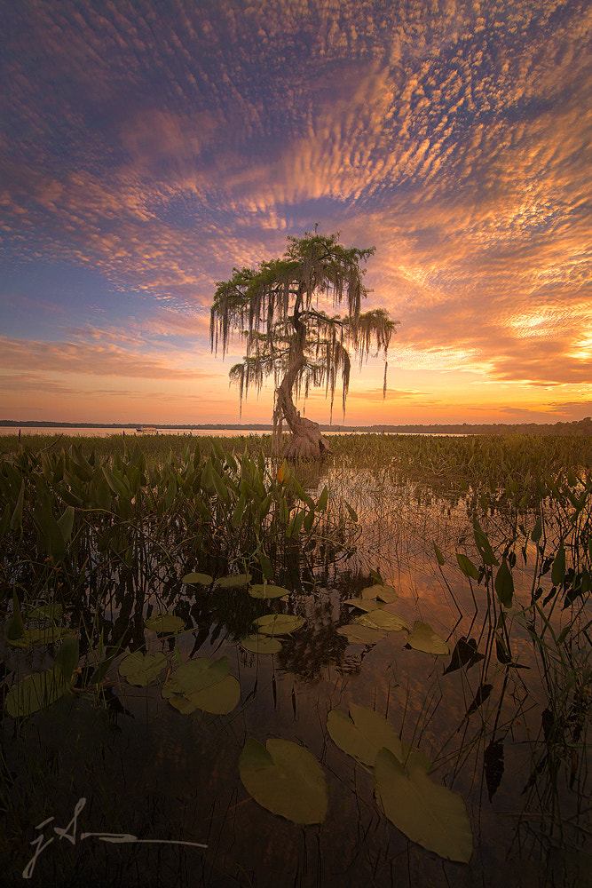 Photograph Gator Bait by Jesse Summers on 500px