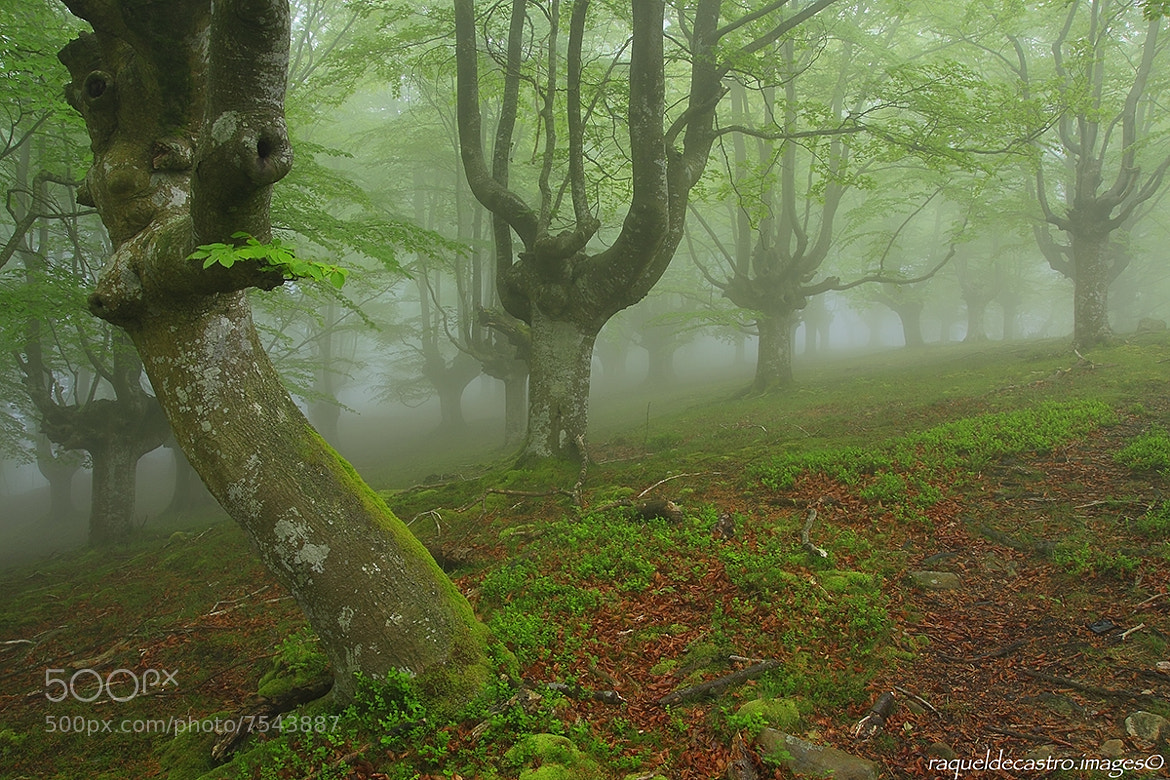 Photograph Mystic forest. by Raquel de Castro on 500px