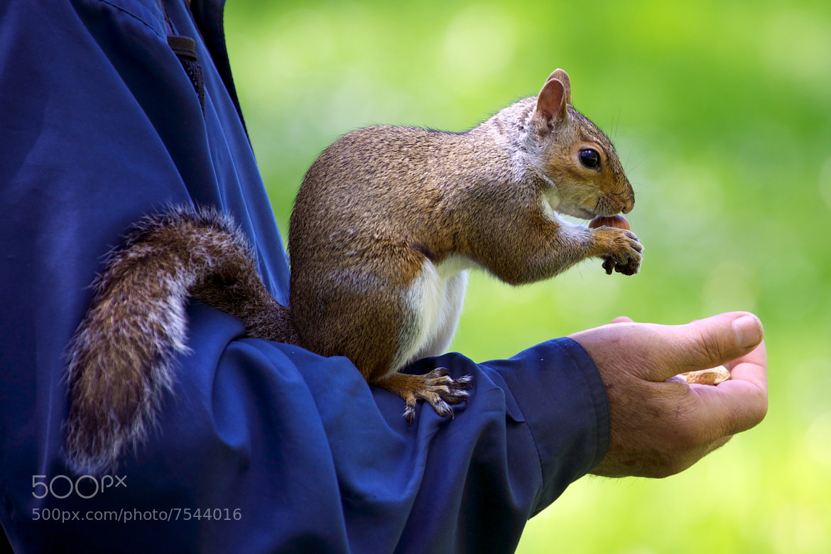 Photograph Brave for a nut ! by Christophe Pfeilstücker on 500px