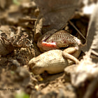 Постер, плакат: Sandboa with Kill