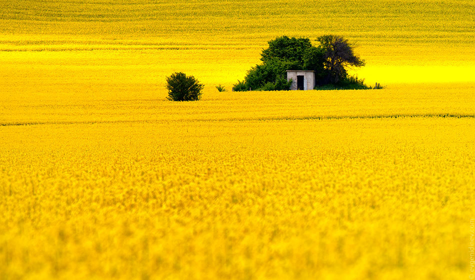 Photograph Yellow by Evgeni Dinev on 500px