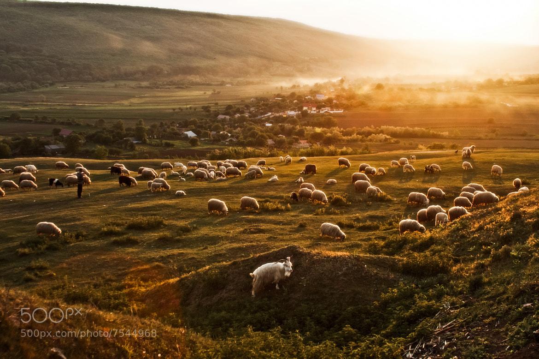 Photograph Royaume de la paix.2 by Elena Simona Craciun on 500px