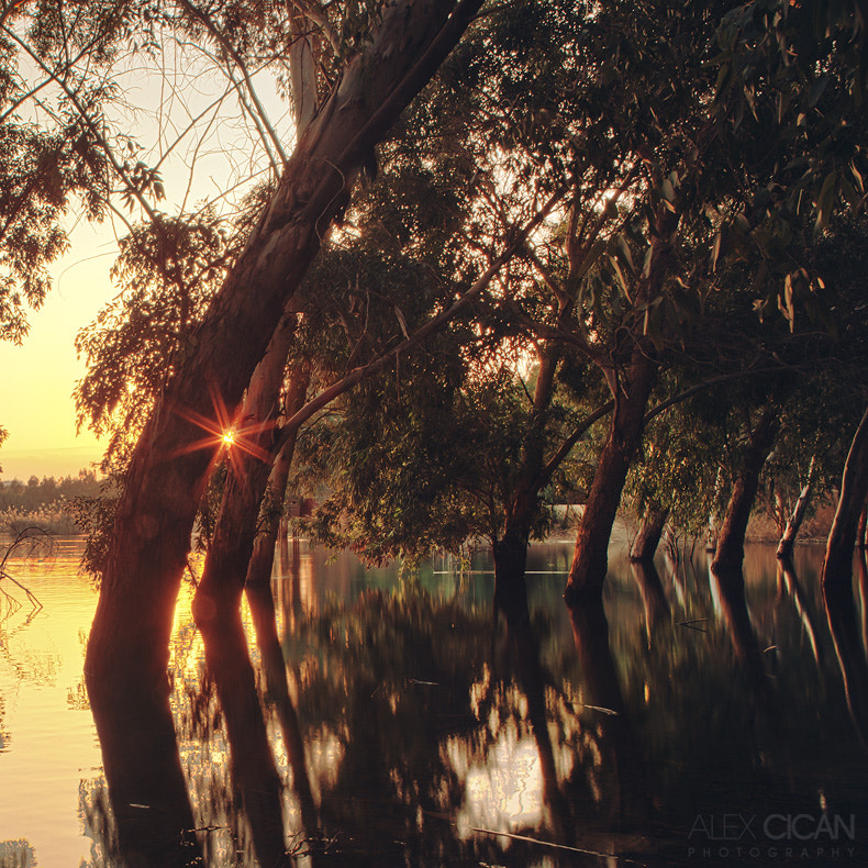 Photograph Between the Trees by Alex Cican on 500px