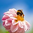 Summer Bee on Flower