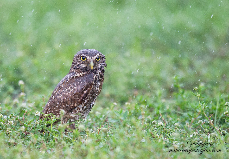 Photograph Caught In The Rain by Judylynn Malloch on 500px