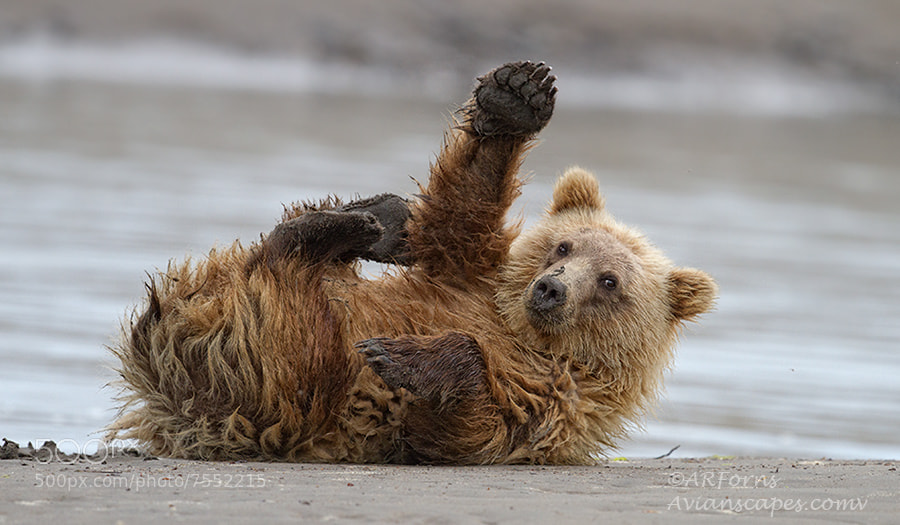 Photograph HI Mom !!!!!!!!!!! by Alfred Forns on 500px