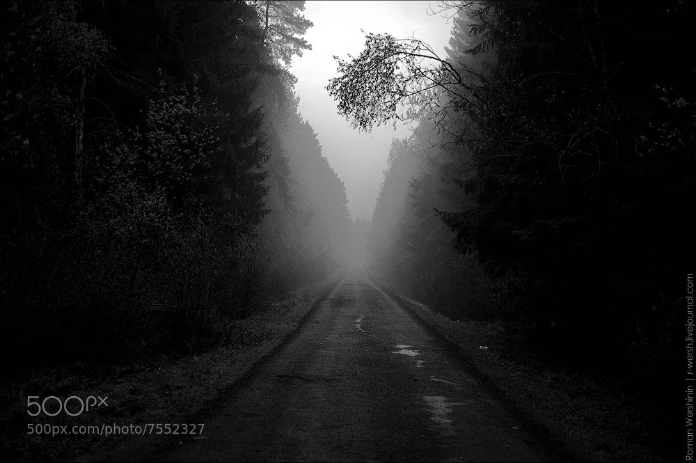 Photograph Forest track in the fog by Roman Wershinin on 500px
