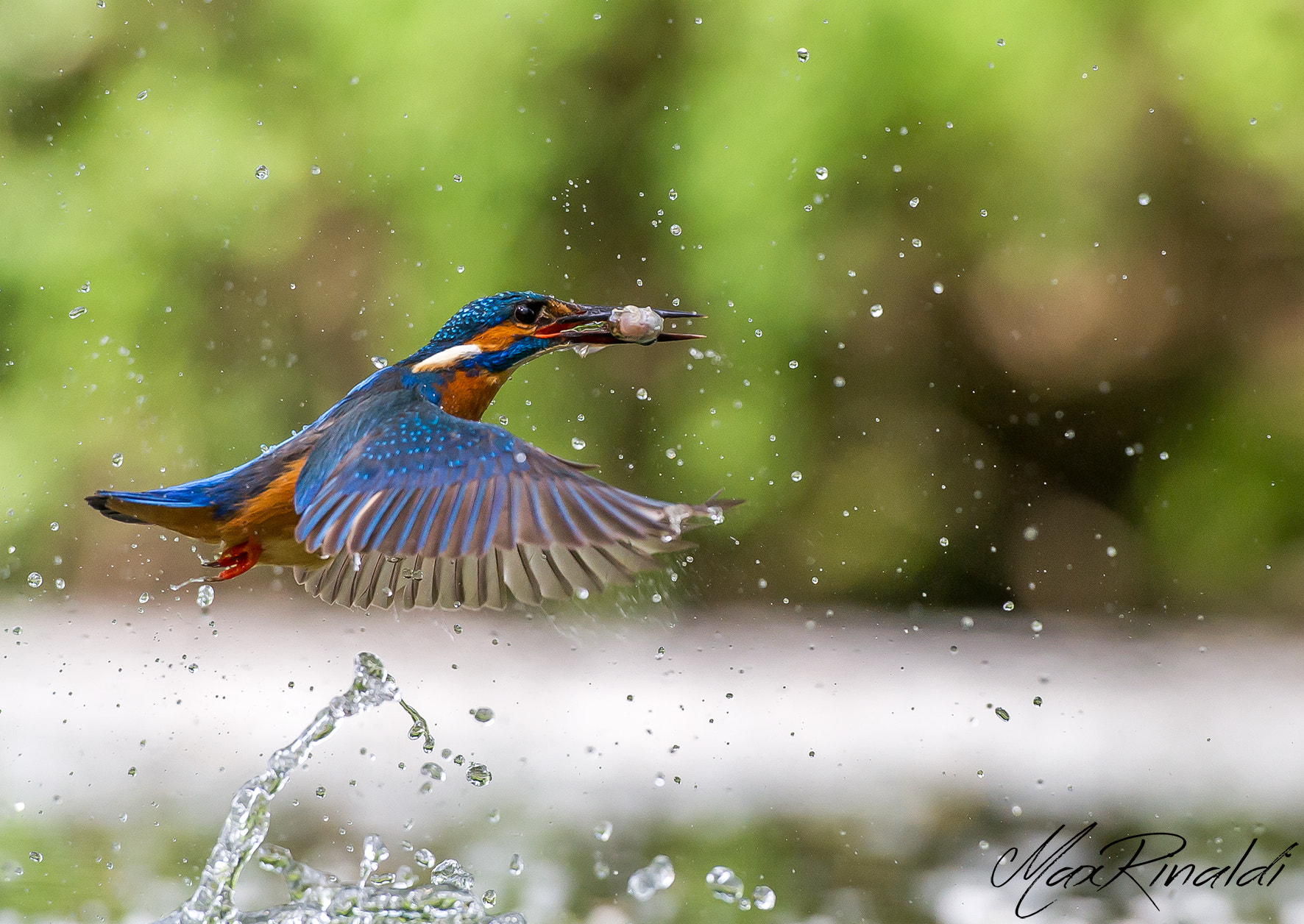 Photograph Come fly with me by Max Rinaldi on 500px