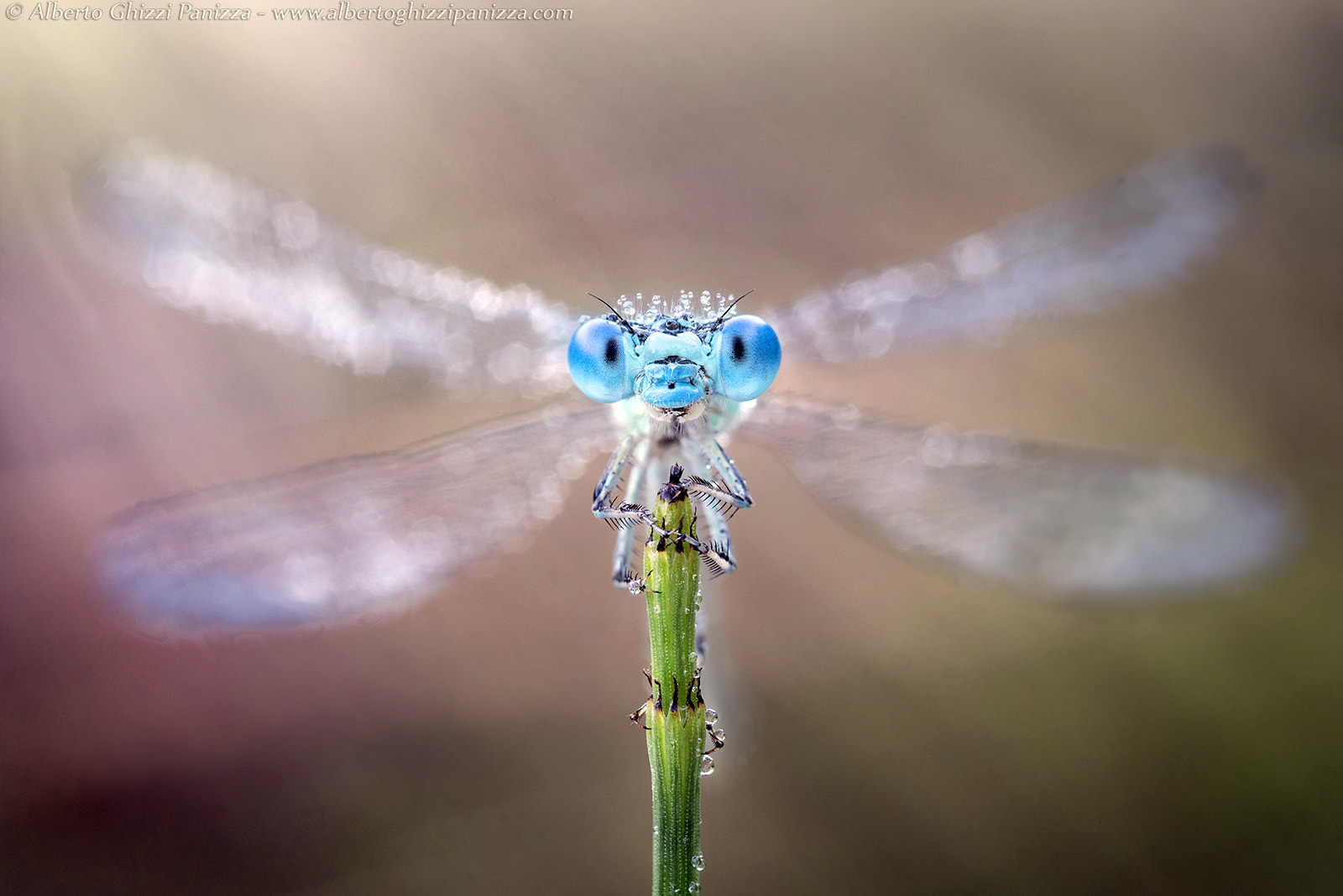 Photograph Coronation of the Queen by Alberto Ghizzi Panizza on 500px