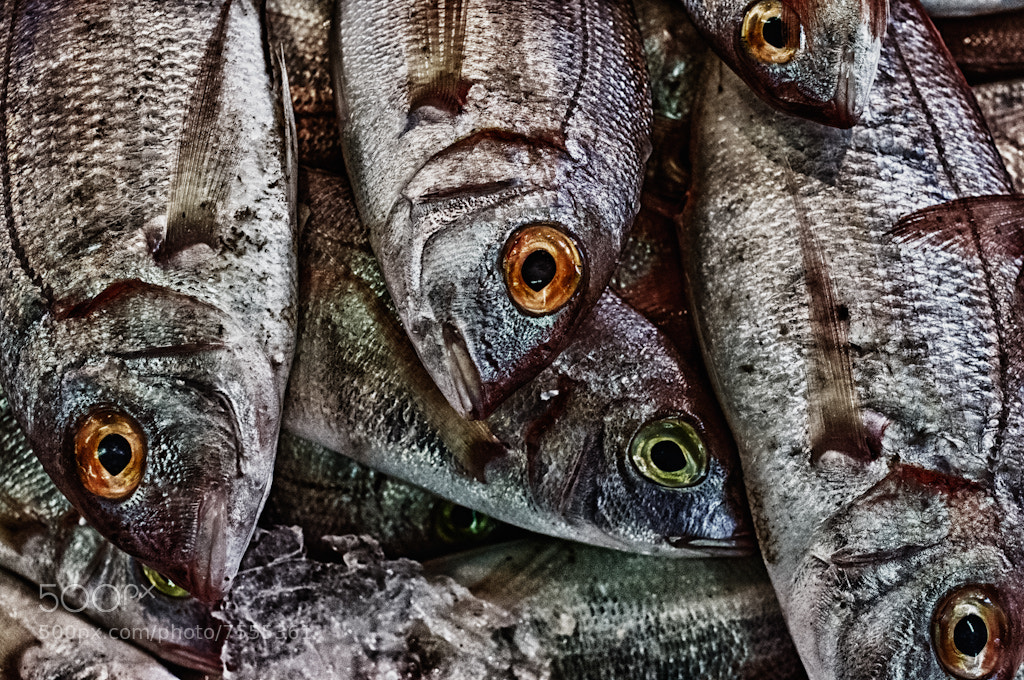 Photograph Fresh Fishes by Sven Doublet on 500px