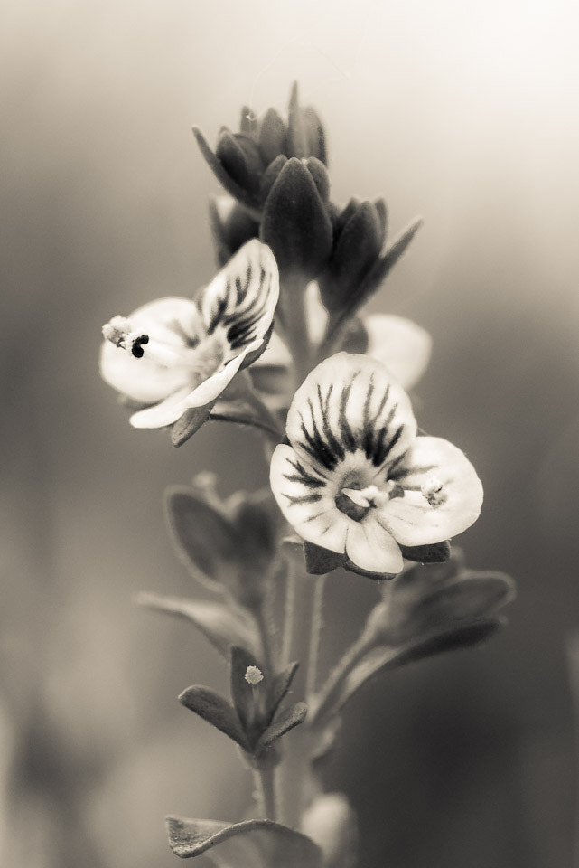 Photograph In Bloom by Tadej Trstenjak on 500px