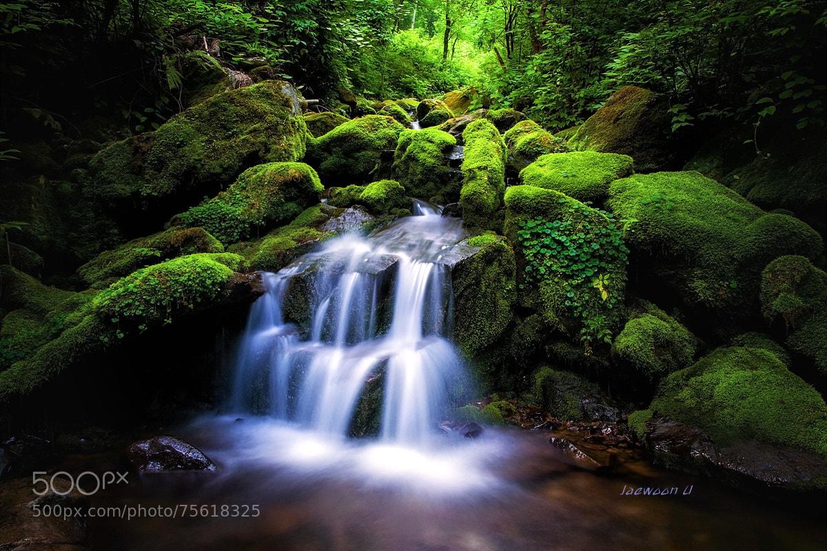 Photograph Moss waterfall by Jaewoon U on 500px