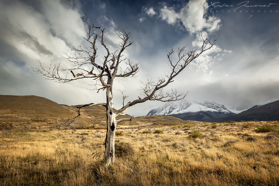 Photograph Patagonian tree by Xavier Jamonet on 500px