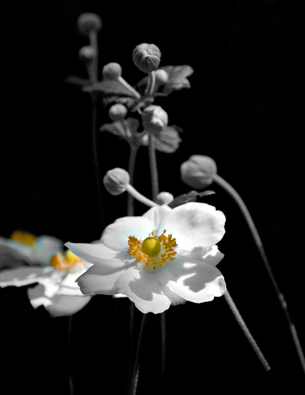 Photograph Yellow on white by Ian  Damerell on 500px