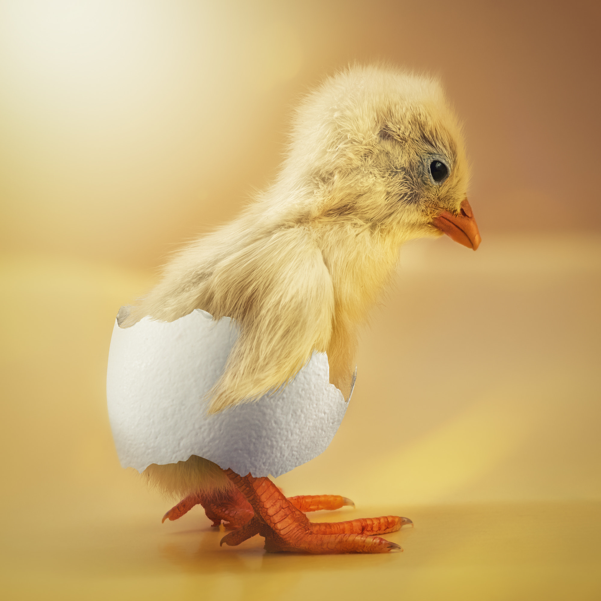 Photograph Just a shy chick by John Wilhelm is a photoholic on 500px