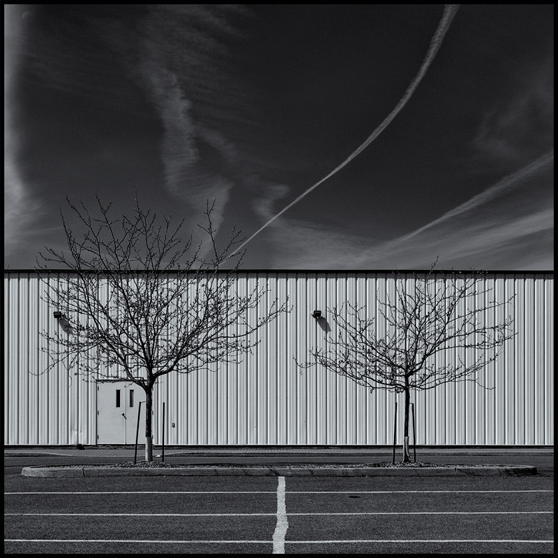 Photograph Two Trees by Chris Ellison on 500px