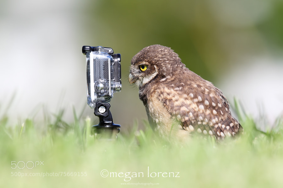 Photograph Selfie by Megan Lorenz on 500px
