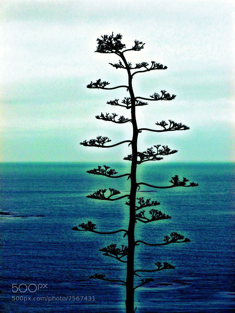 Photograph tree and ocean by Erin Good on 500px