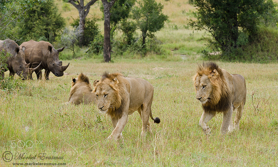 Photograph Who's the king now?? by Morkel Erasmus on 500px