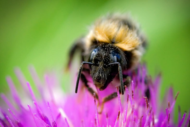 Photograph Old bee by Darren Bushnall on 500px
