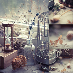 still winter in my garden by Yulia Pletinka (podsolunuh)) on 500px.com