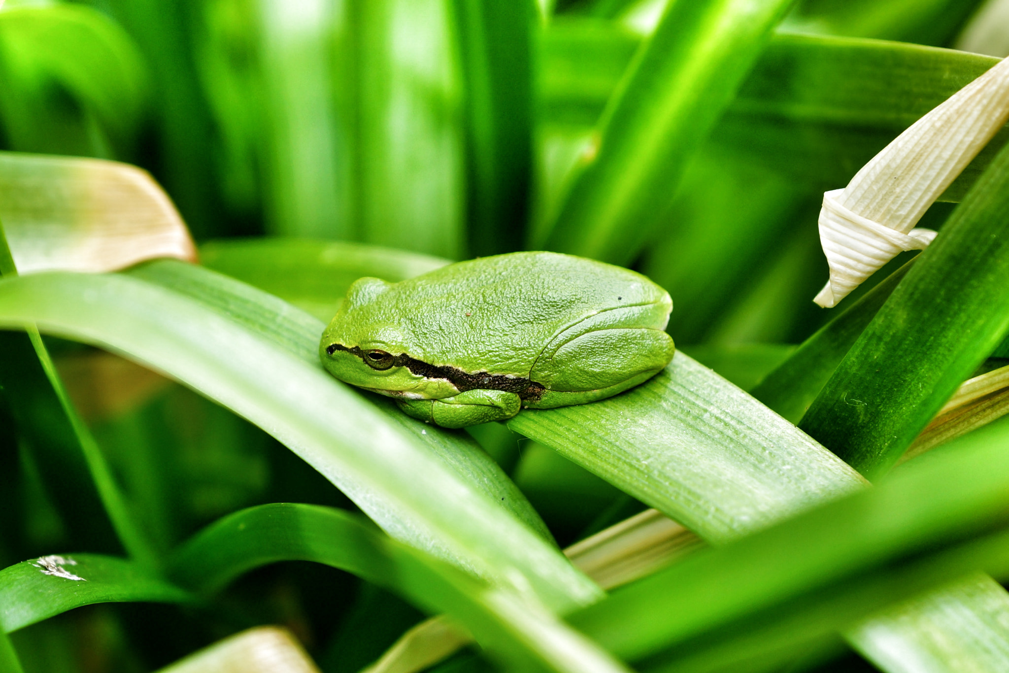 Photograph Very little frog by Christopher Neumann on 500px