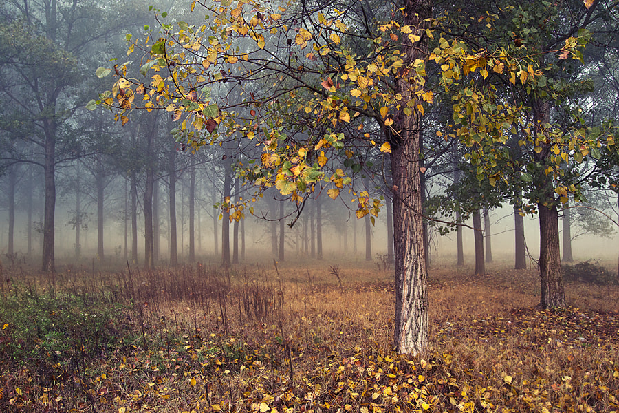 Photograph Remembering autumn by Greta Spinoni on 500px
