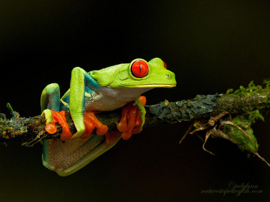 Photograph Just Hanging Out by Judylynn Malloch on 500px