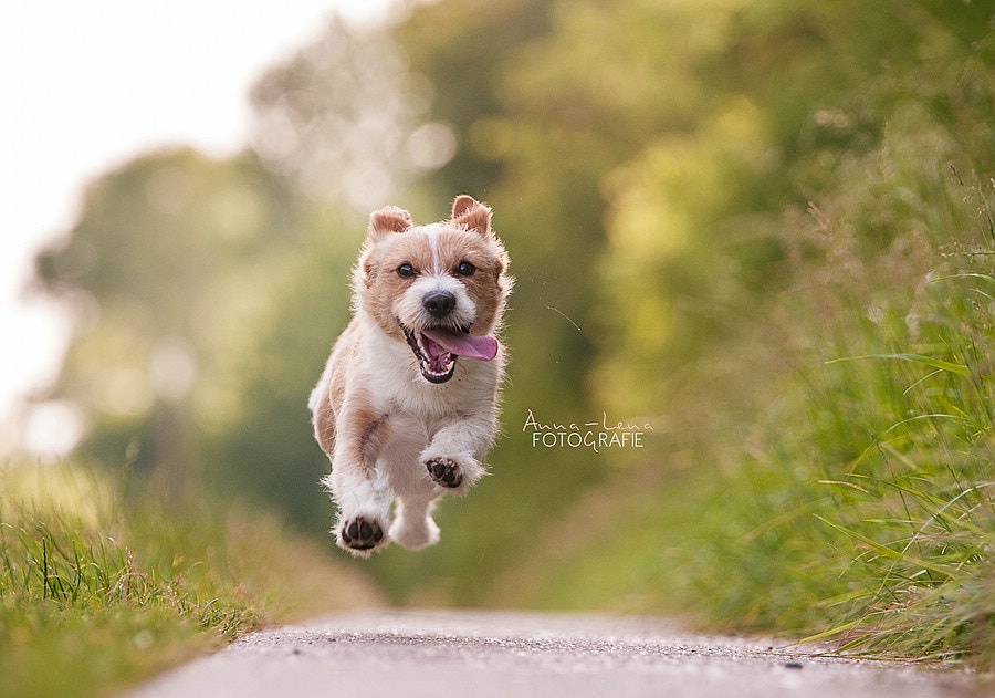 Flying dog by Anna-Lena Gerharz Fotografie  on 500px.com