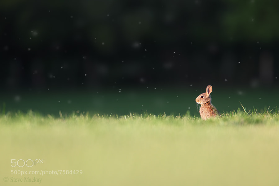 Photograph Rabbit Scape by Steve Mackay on 500px
