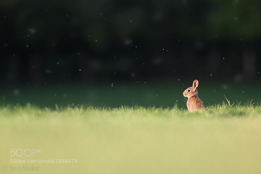 Photograph Rabbit Scape by Steve Mackay on 500px