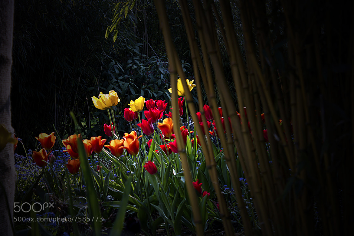 Photograph at the garden  by dkp foto on 500px