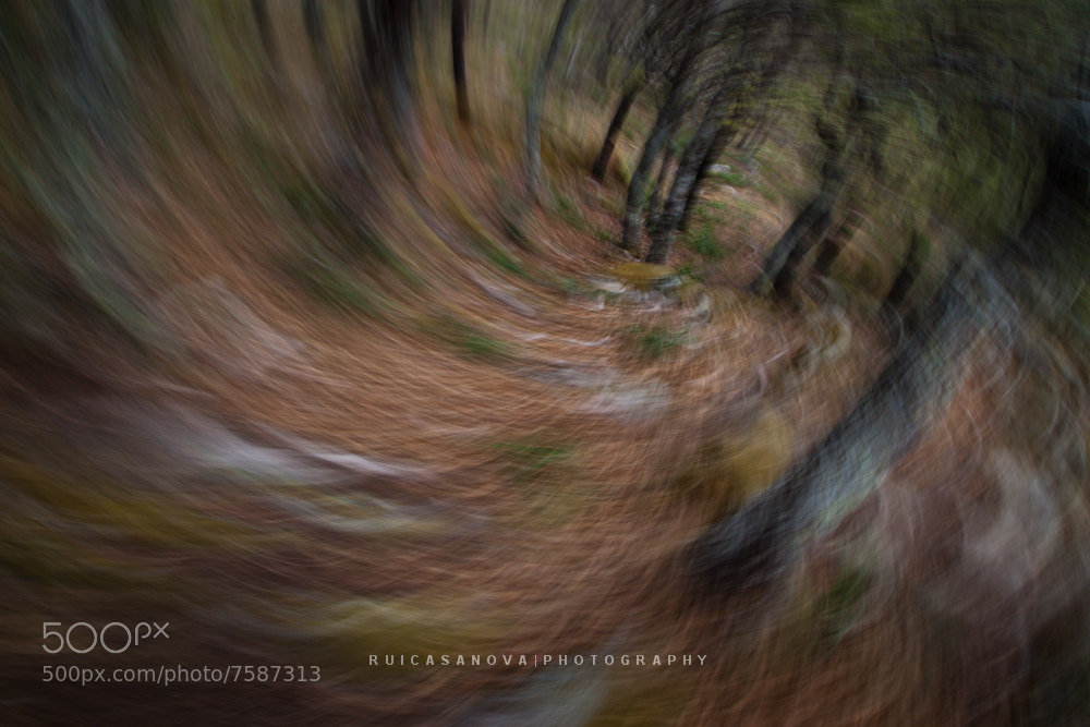 Photograph into the forest by Rui Casanova on 500px