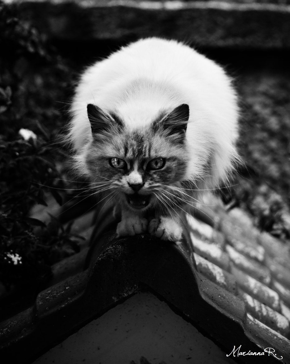 Photograph Rusty by Marianna  Restaino on 500px