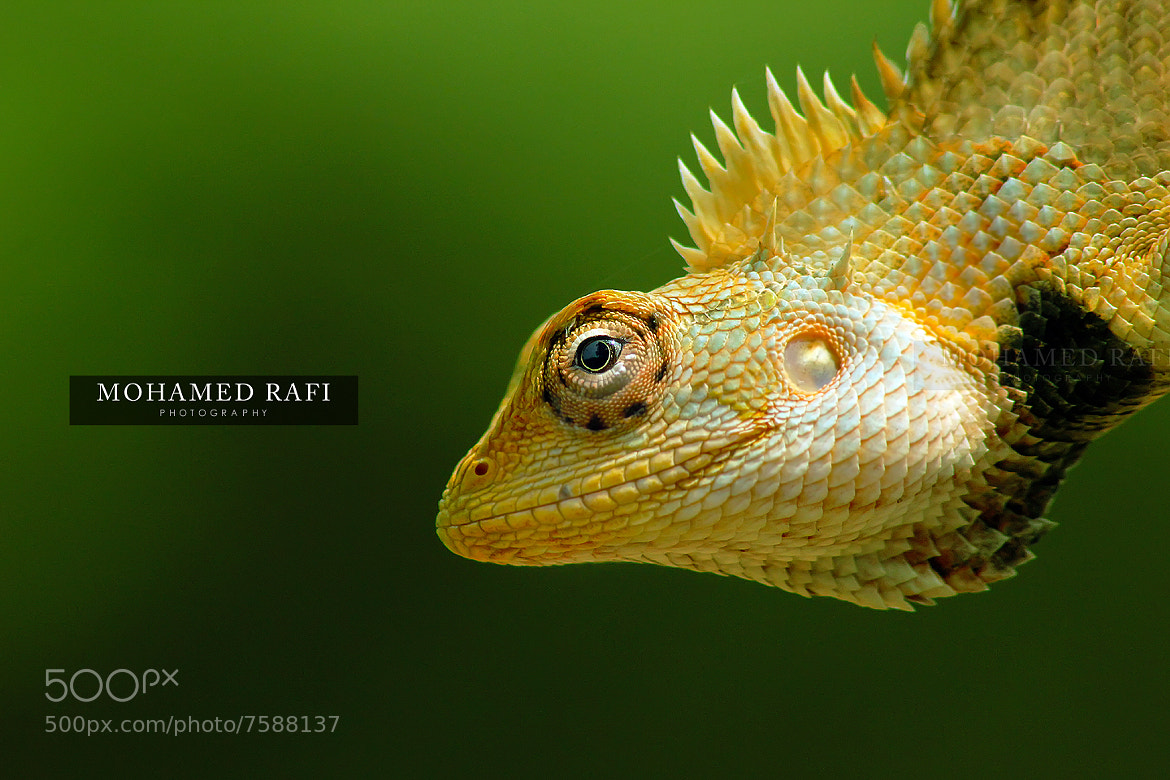Photograph Macro by Mohamed  Rafi on 500px