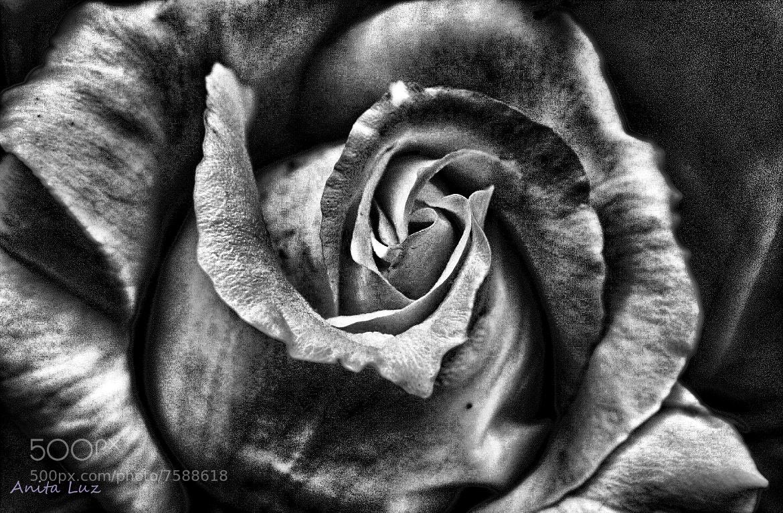 Photograph Cerca de mi piel by Anita Luz on 500px