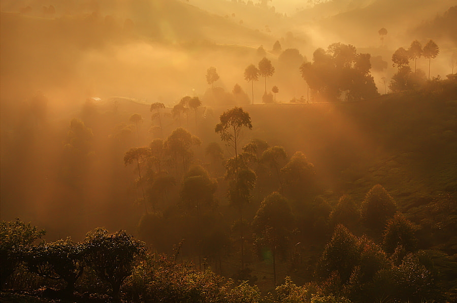 Photograph Misty Morning  by Andiyan Lutfi on 500px