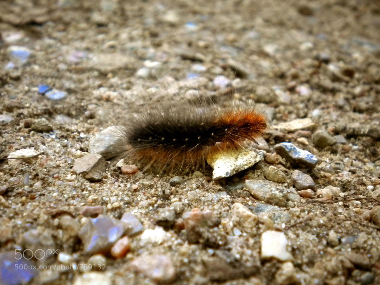 Photograph caterpillar by KingMcBenz . on 500px
