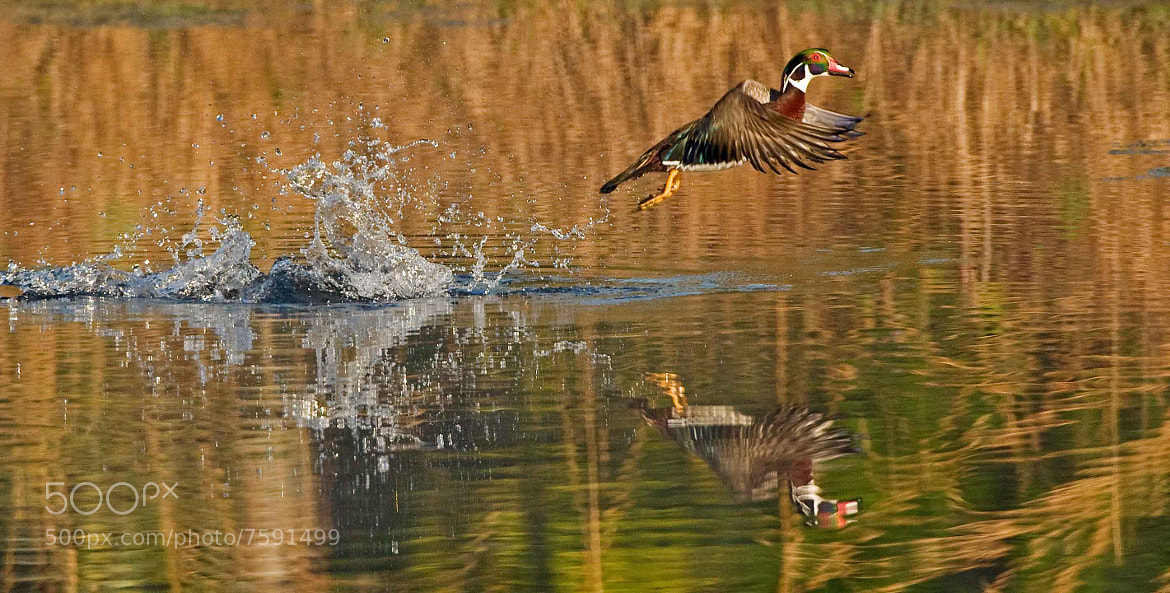 Photograph Take Off by Wayne Bennett on 500px