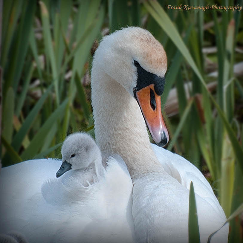 Photograph Me And My Mom by Frank  Kavanagh on 500px