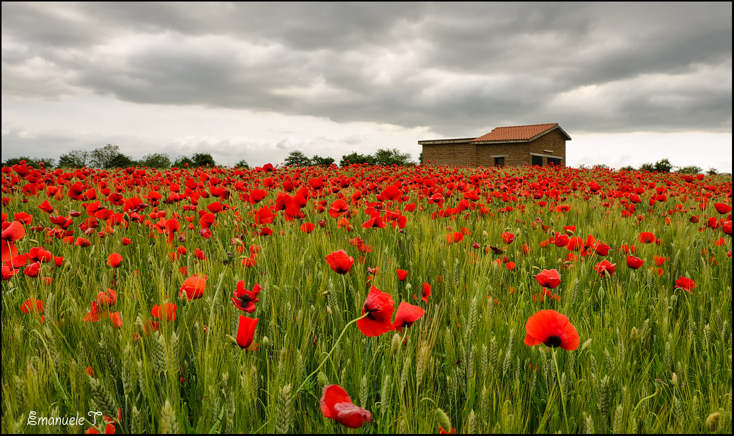 Photograph Red. by Emanuele Torrisi on 500px