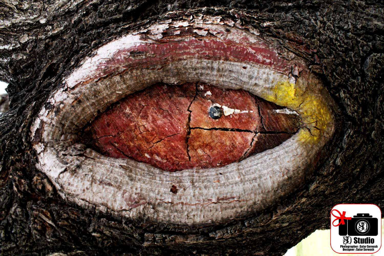 Photograph Eyes in the Trees by Salar Aghashti  on 500px