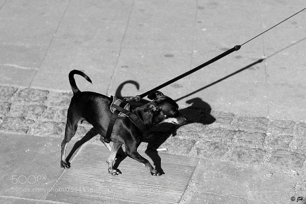 Photograph Dog to shadow by Jörg H. on 500px