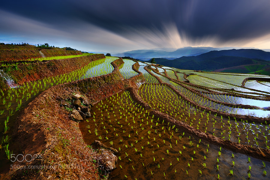 Photograph Baby rice field  @ Mae Jam by Wanasapong Jaiinpol on 500px