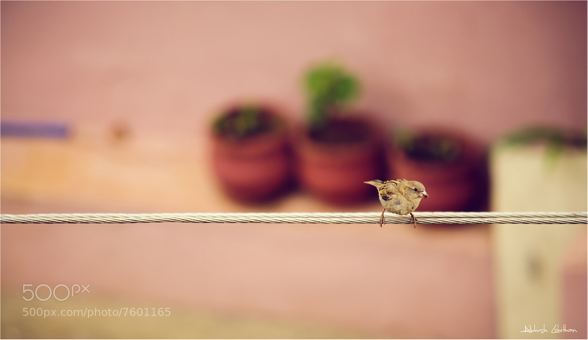Photograph Early bird catches the worm. by Abhish Lohithan on 500px