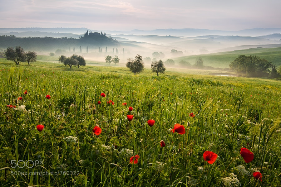 Photograph Tuscan spring 1 by Daniel Řeřicha on 500px